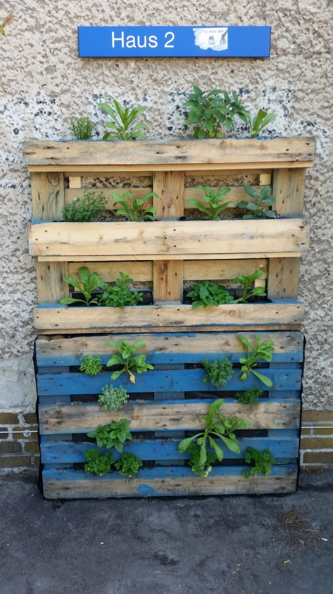ideen zum nachmachen#8: vertikales gärtnern | freigarten potsdam